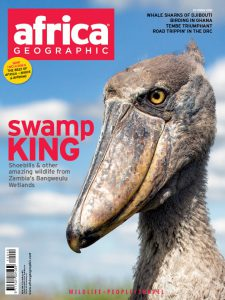 Kapotwe Shoebill Africa Geographic Cover