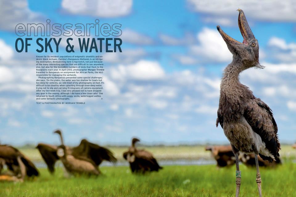 Bangweulu portfolio in Africa Geographic