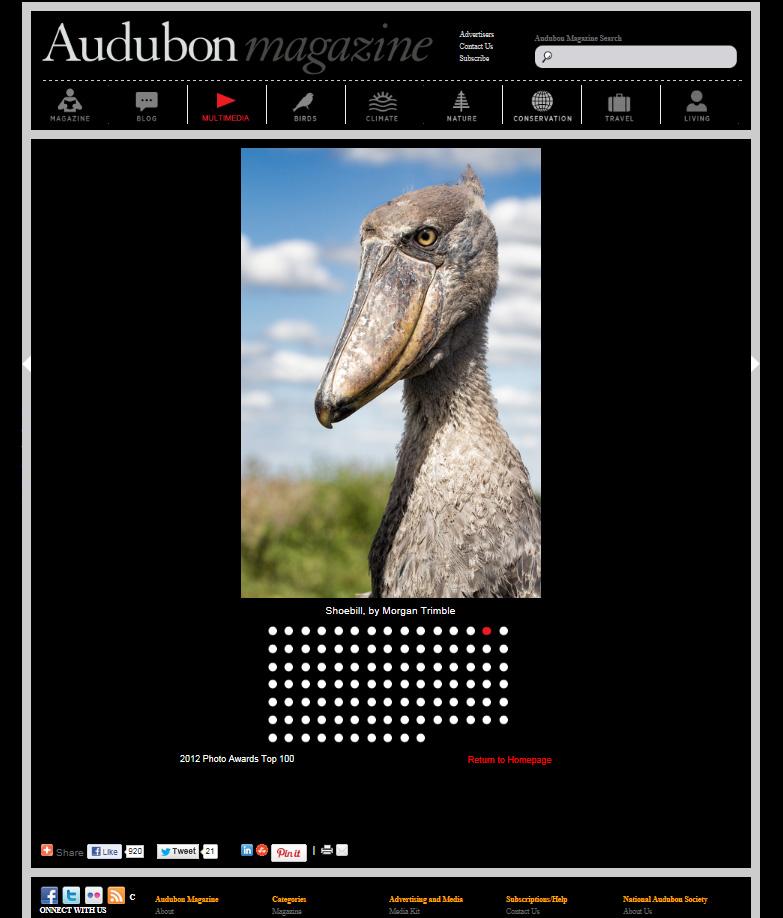 Top 100 bird photos of 212