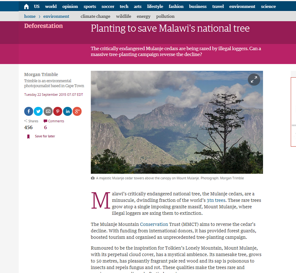 Planting to save Malawi's national tree