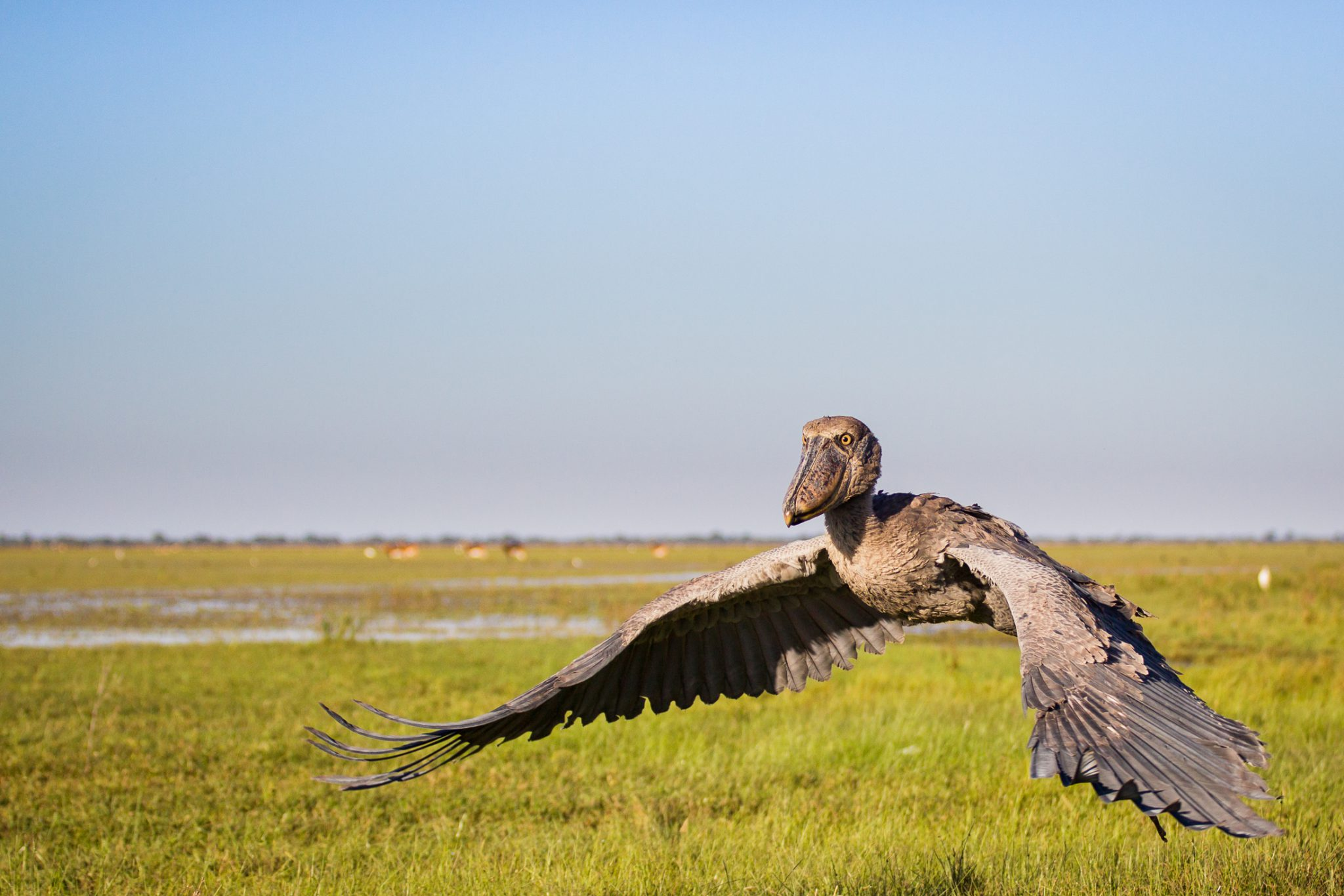Featured in Audobon Magazine's top 100 bird photos of 2012