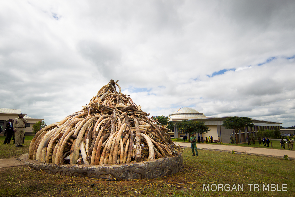 Malawi's ivory stockpile at parliament