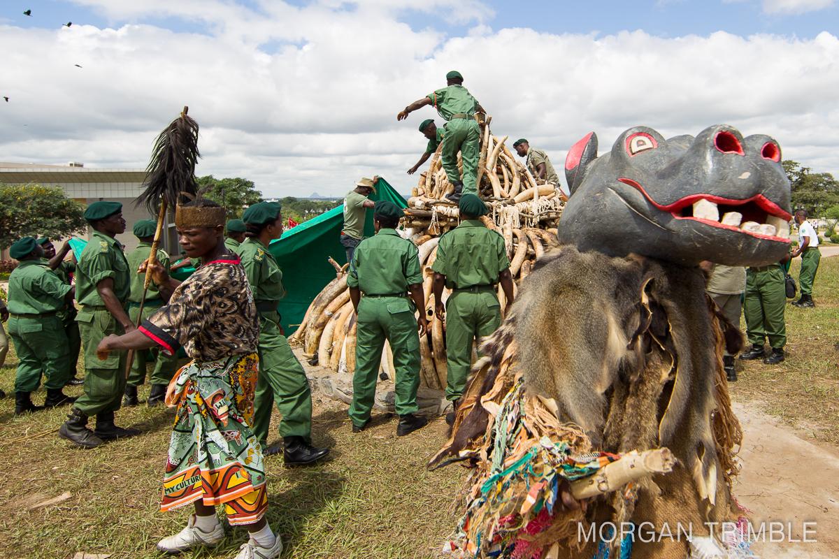 ivory burn canceled