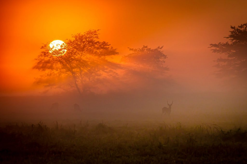 Sunday Times Wildlife photo of the month Busanga Sunrise