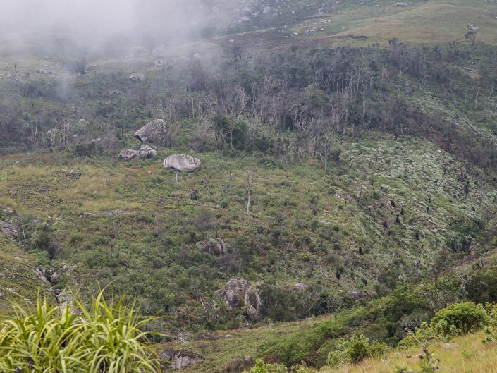 Illegal loggers have eradicated Mulanje cedar from huge swathes of the mountain. It's estimated that cedars now cover less than 5 square kilometres, and loggers are moving into the last strongholds for the species.