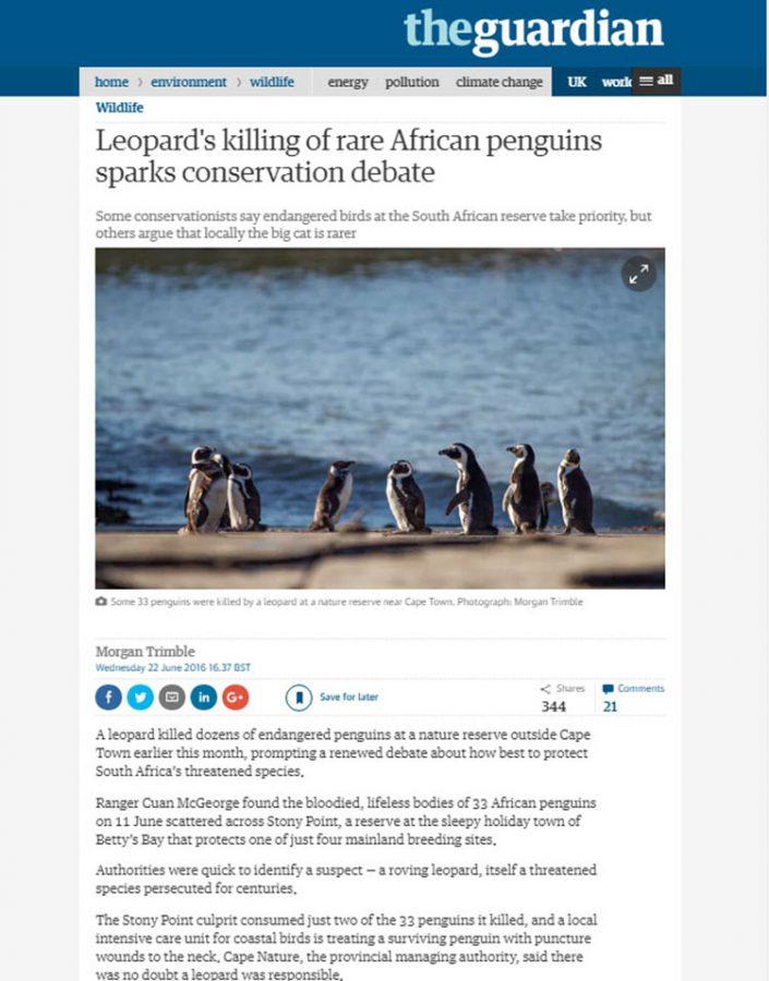 Leopard's killing rare African penguins sparks conservation debate