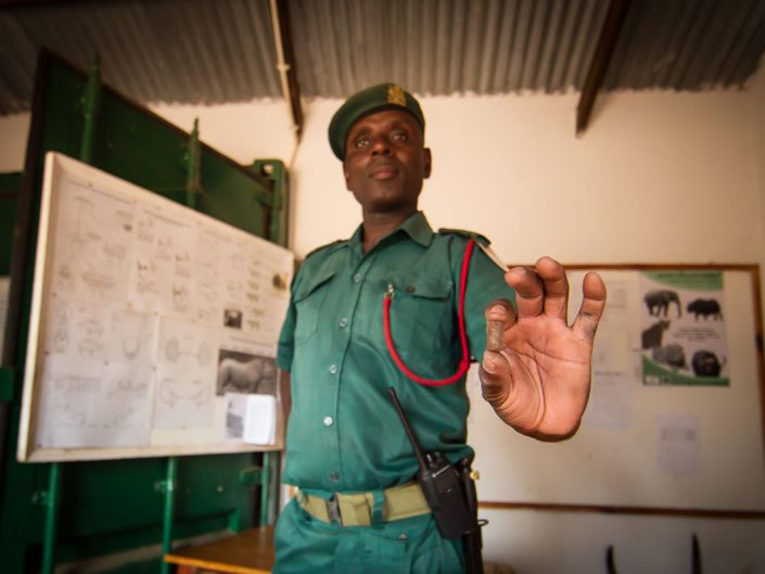 The head of law enforcement demonstrates how people make Illegal bullet for muzzle loading guns by chopping rebar into small pieces; these were confiscated from poachers at the Majete Wildlife Reserve in Malawi and kept in a vault to show interested visitors.