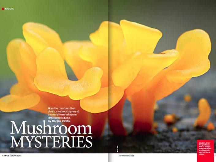 Mushroom Mysteries