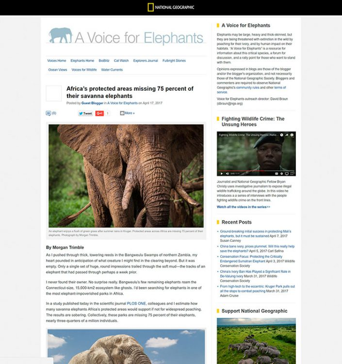 Africa's protected areas missing 75% of their savanna elephants