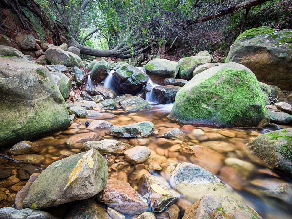 Stream, Newlands Forest, Table Mountain National Park, 2017