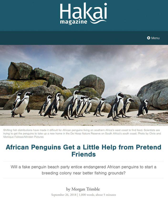 African Penguins Get a Little Help from Pretend Friends