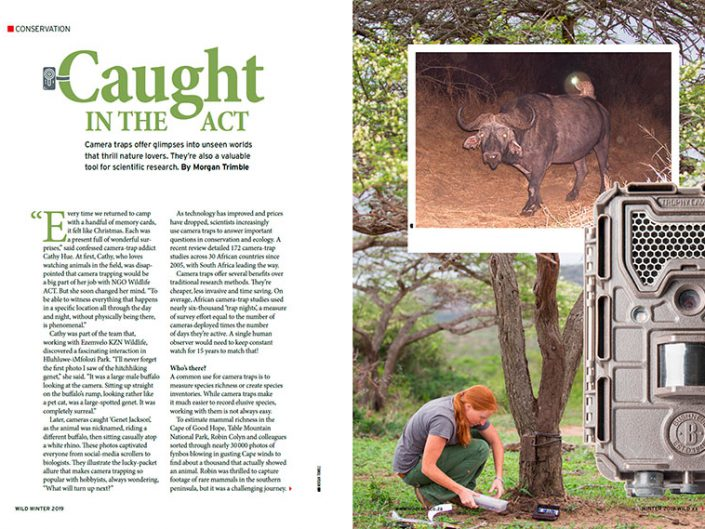 Caught in the Act: Camera Traps for Conservation