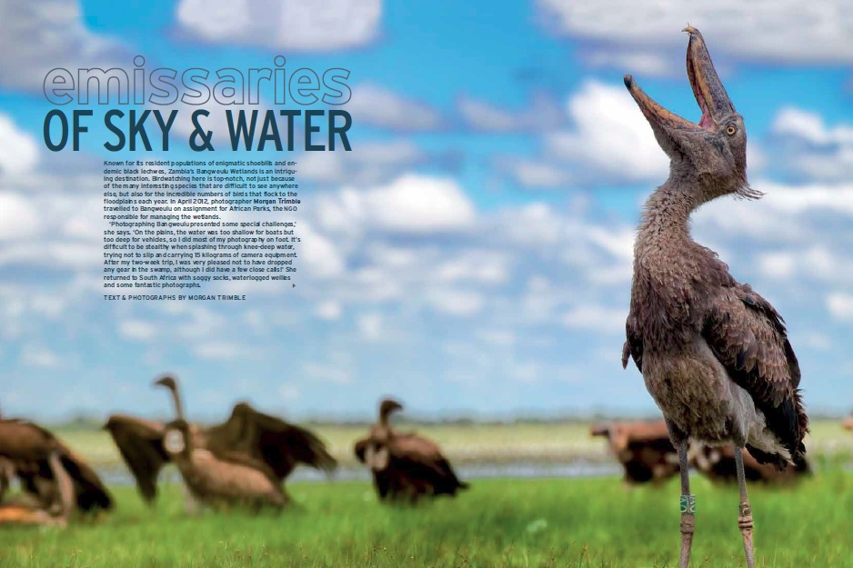 Bangweulu Article from Africa Geographic magazine