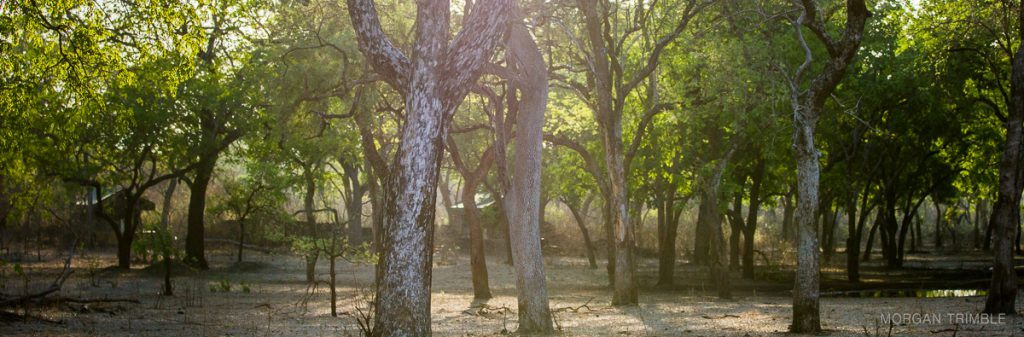 Thawale luxury tented camp in Majete Wildlife Reserve