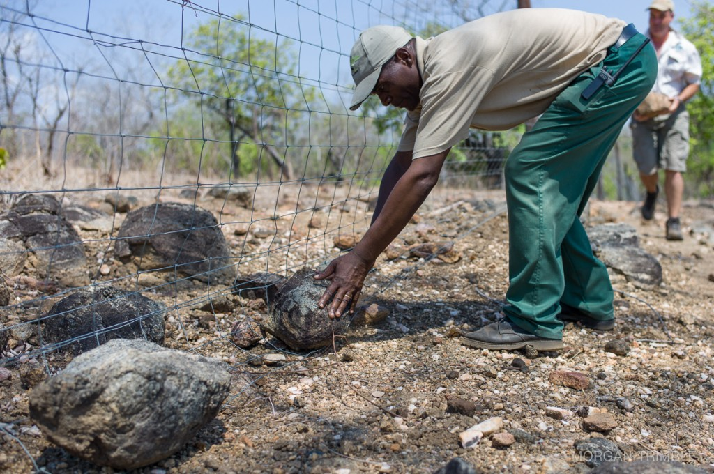 Fence repairs at Majete Wildlife Reserve