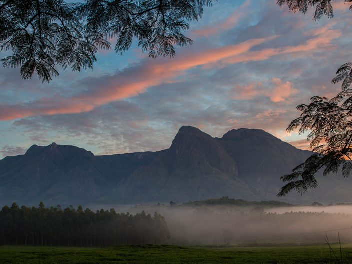 With luck and continued hard work and support, stands of majestic Mulanje cedar will once again become common on Mount Mulanje.