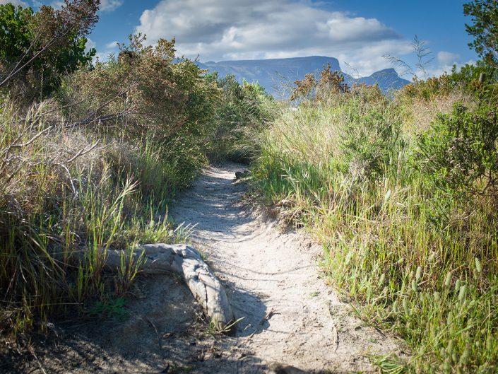 Fynbos, Lower Tokai, Table Mountain National Park, 2017